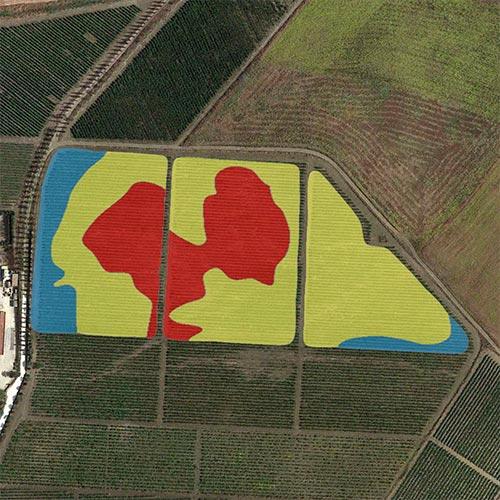 analisi viticoltura biomassa