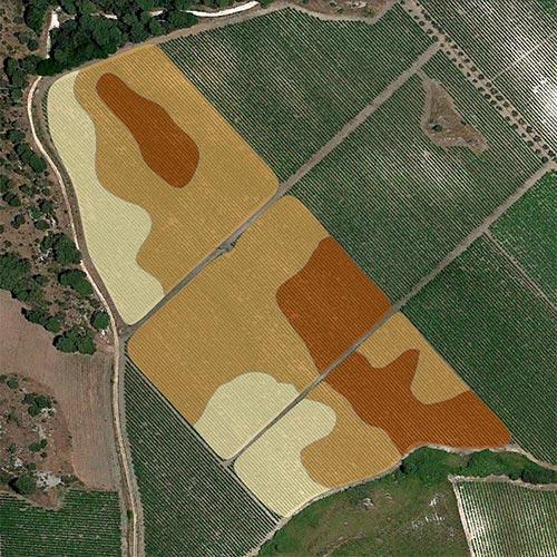 analisi viticoltura fertilizzazione